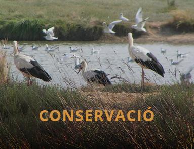 Conservació