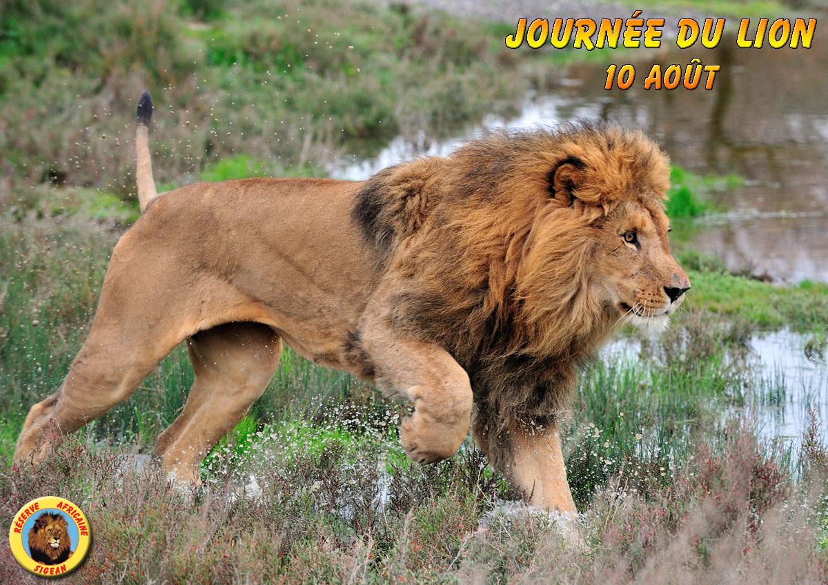 Journée mondiale du Lion 2017