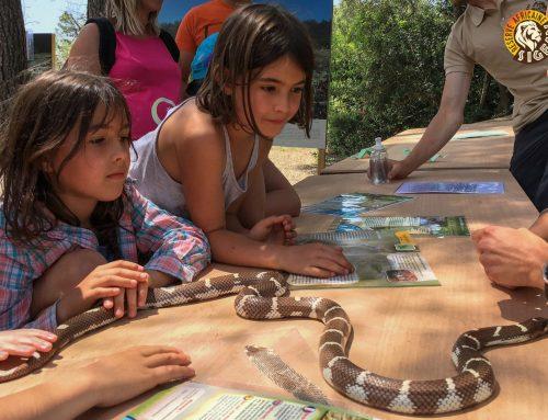 désensibilisation aux serpents