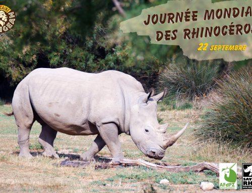 Aujourd'hui 22 septembre, c'est la journée mondiale des Rhinocéros